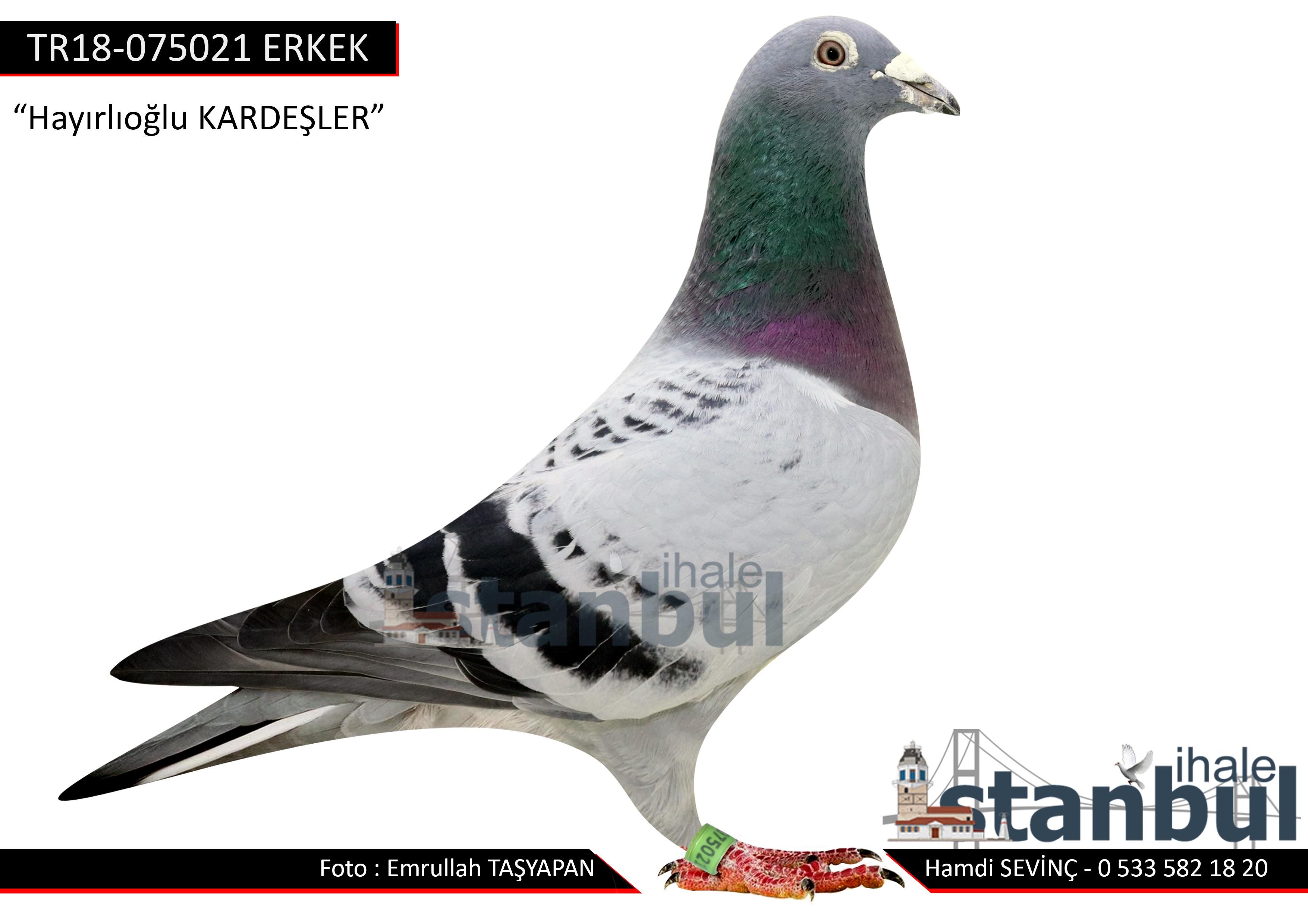 TR18-075021 ERKEK DE KLAK 613 TORUNU