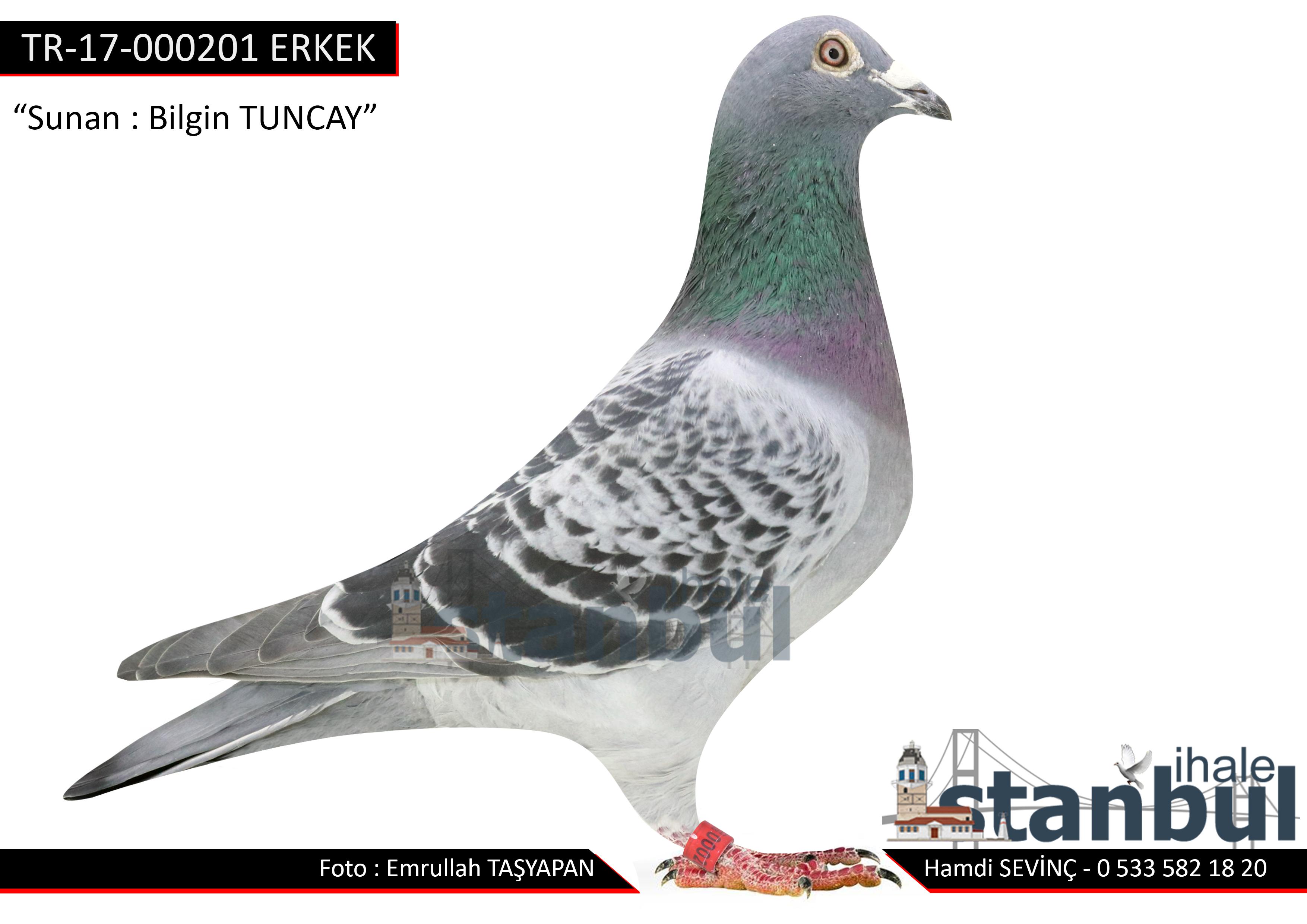 TR-17-000201 ERKEK