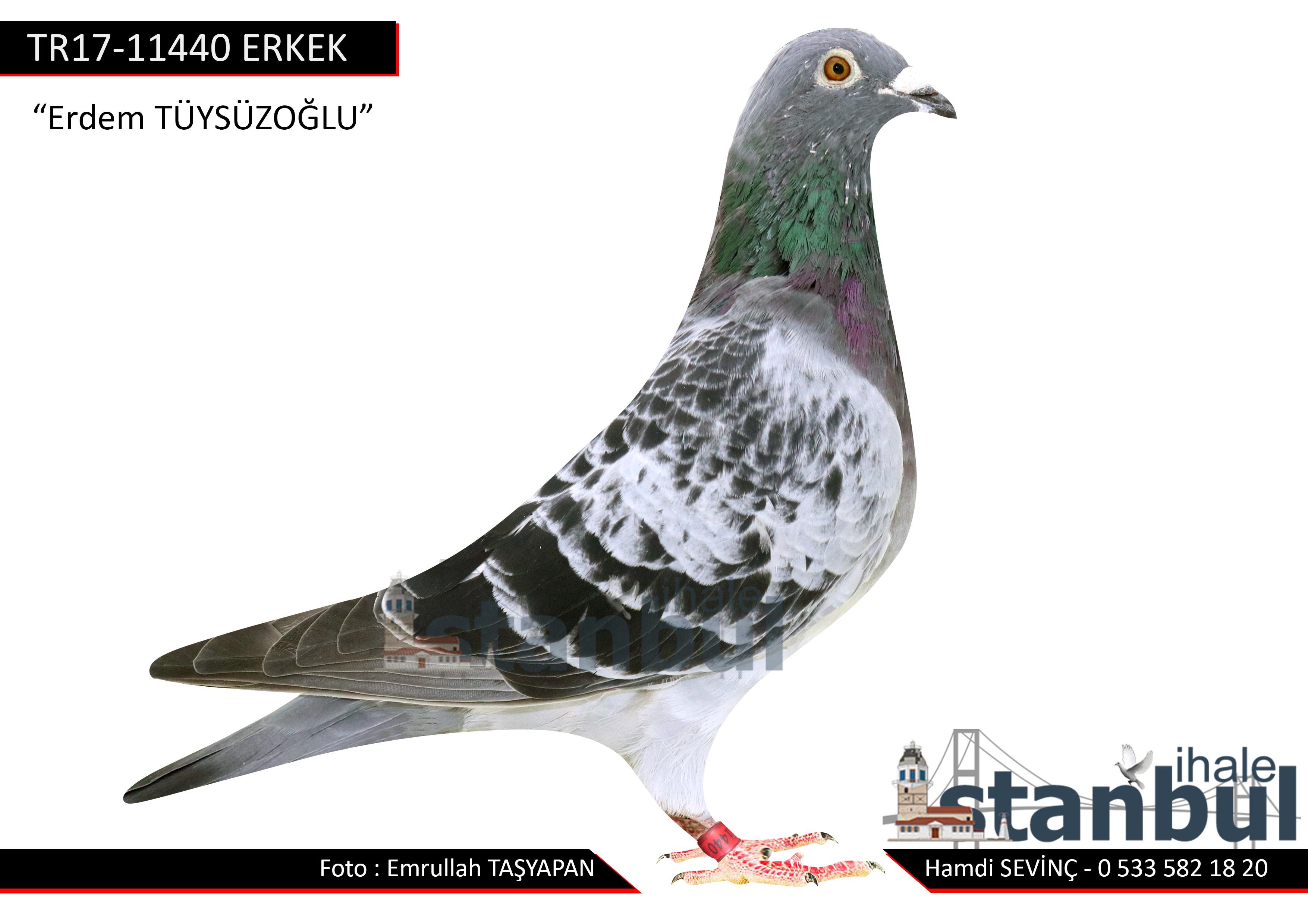 TR17-111440 ERKEK