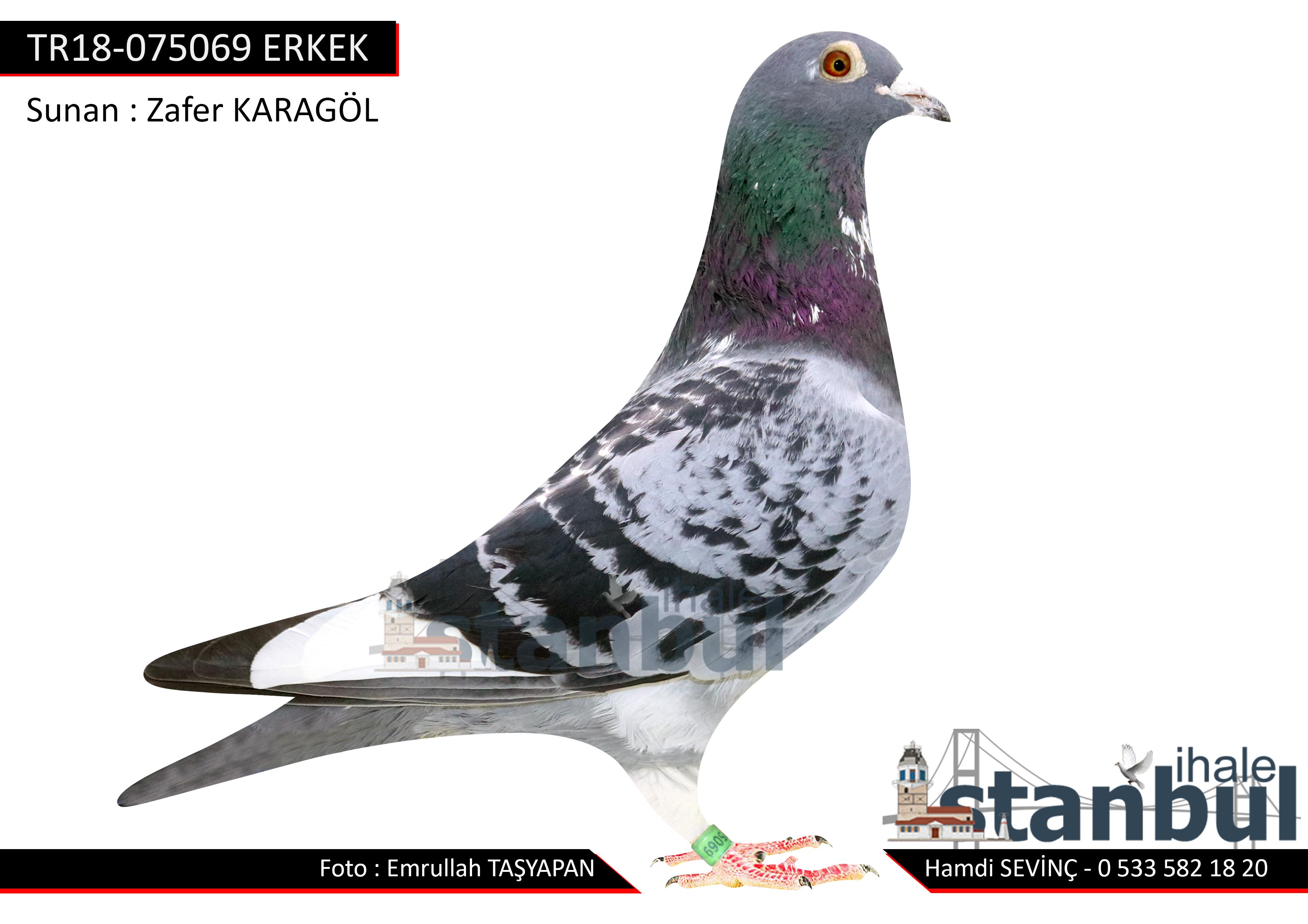 TR18-075069 ERKEK
