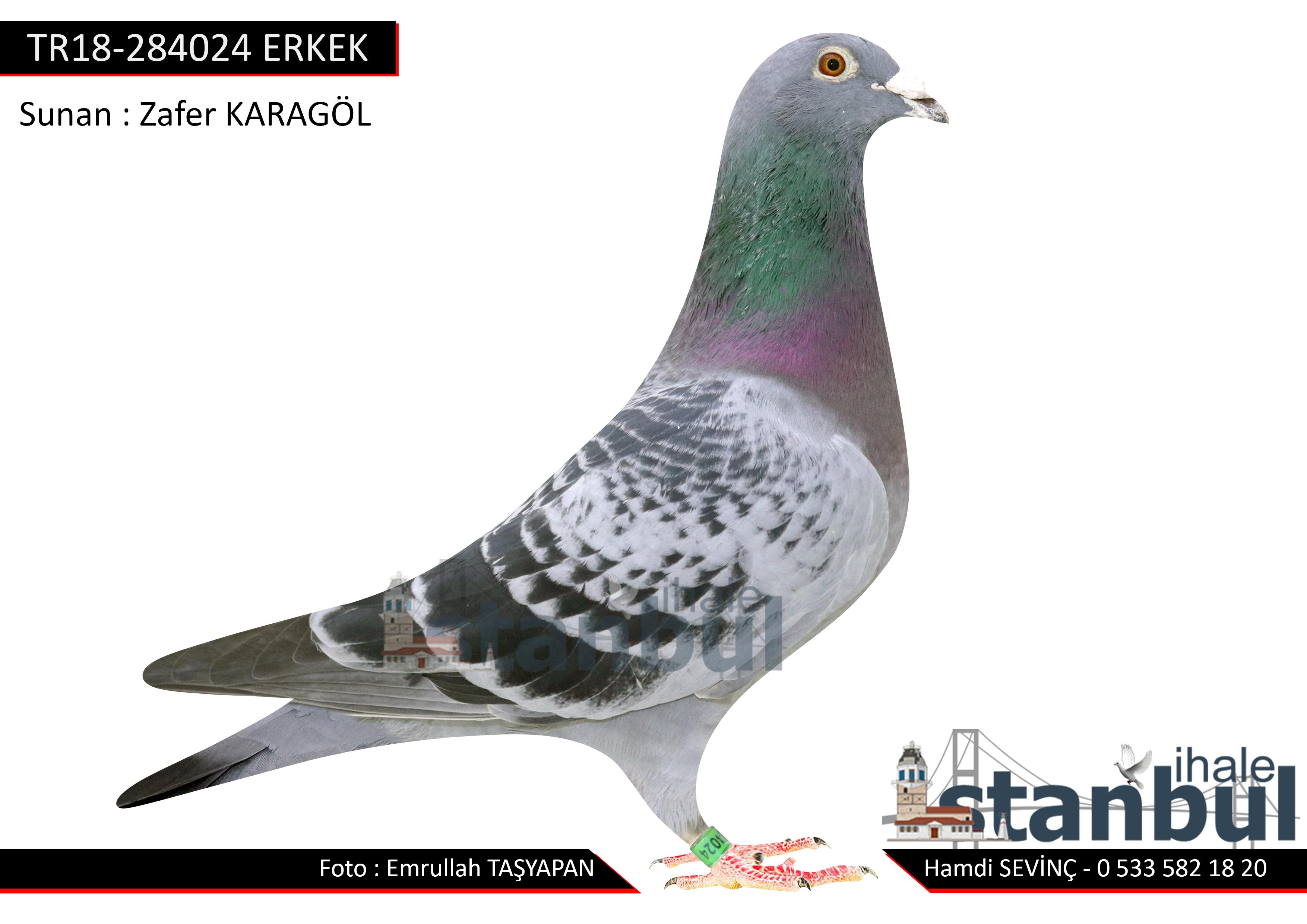 TR18-284024 ERKEK