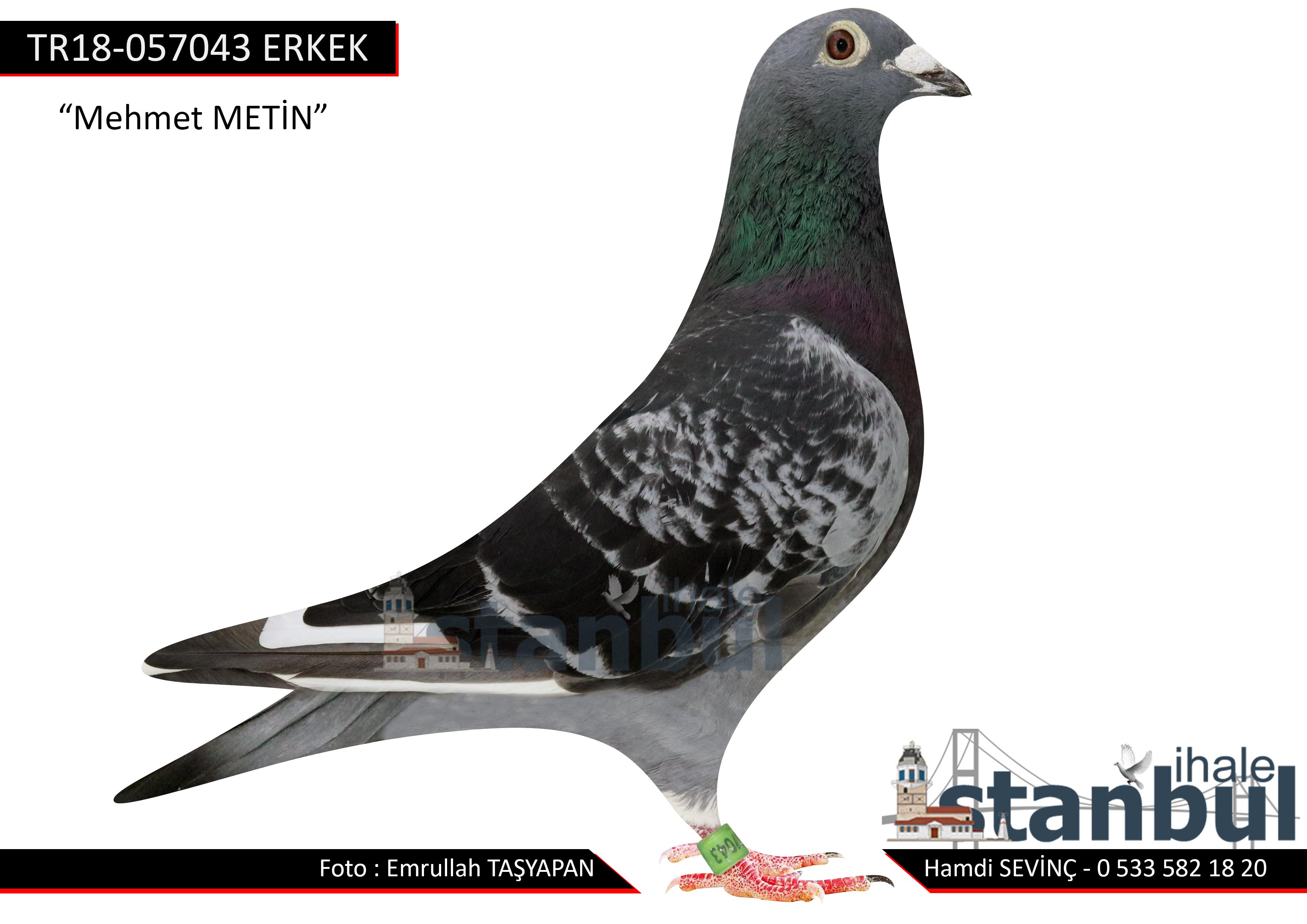 TR18-057043  %50 Gerard Schalkwijk %50 HENK DE WEERD