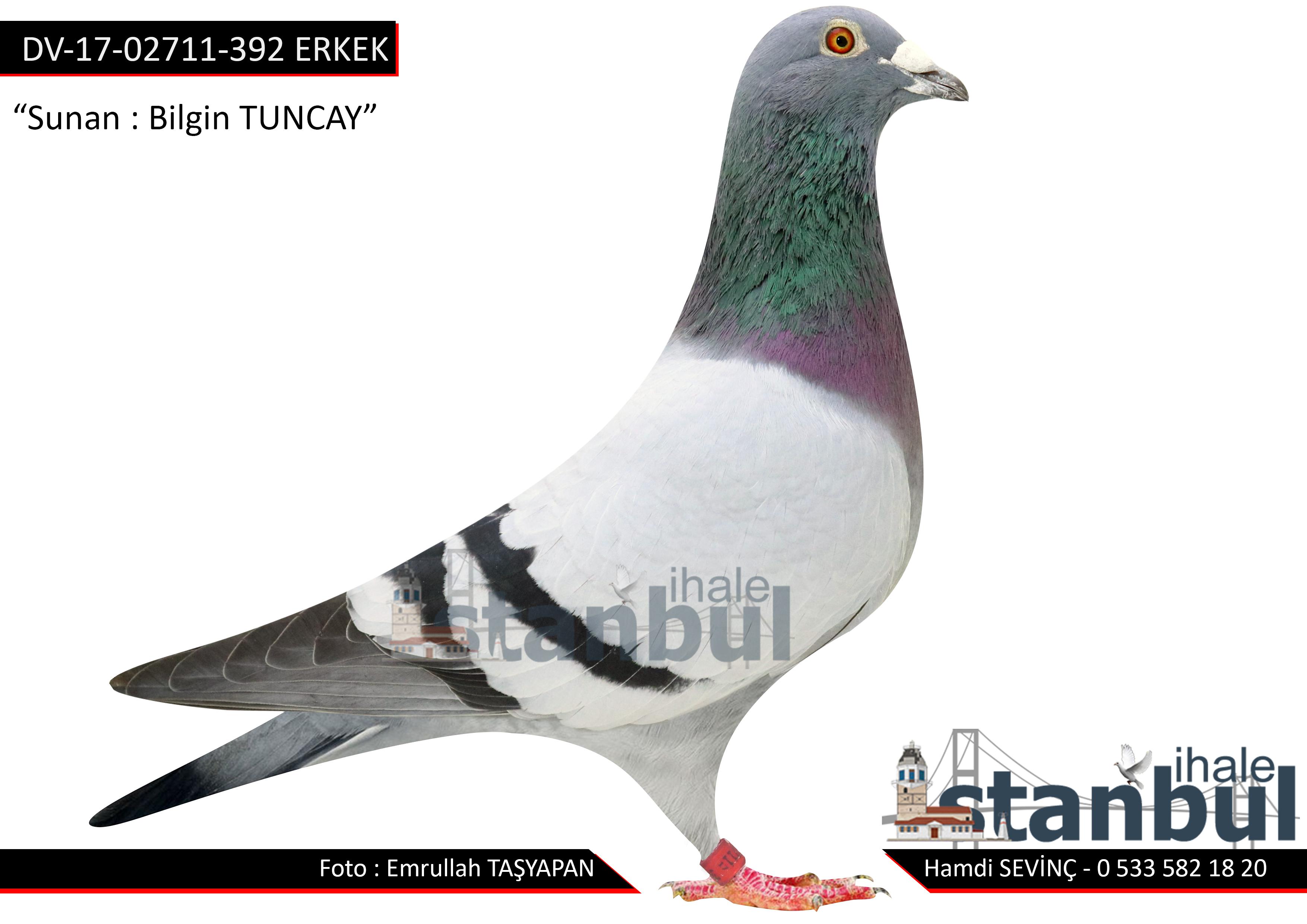 DV-17-02711-392 ERKEK