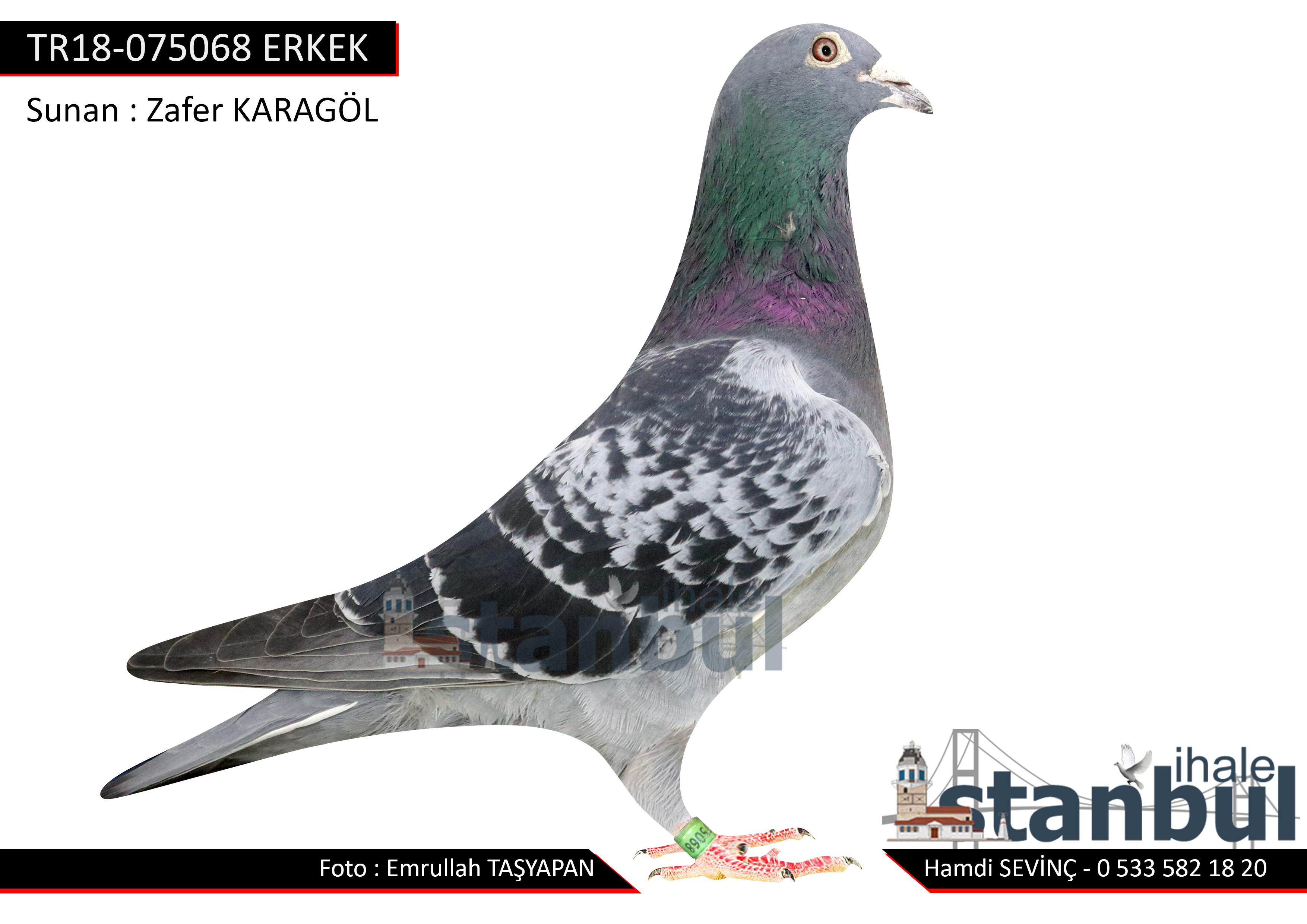 TR18-075068 ERKEK