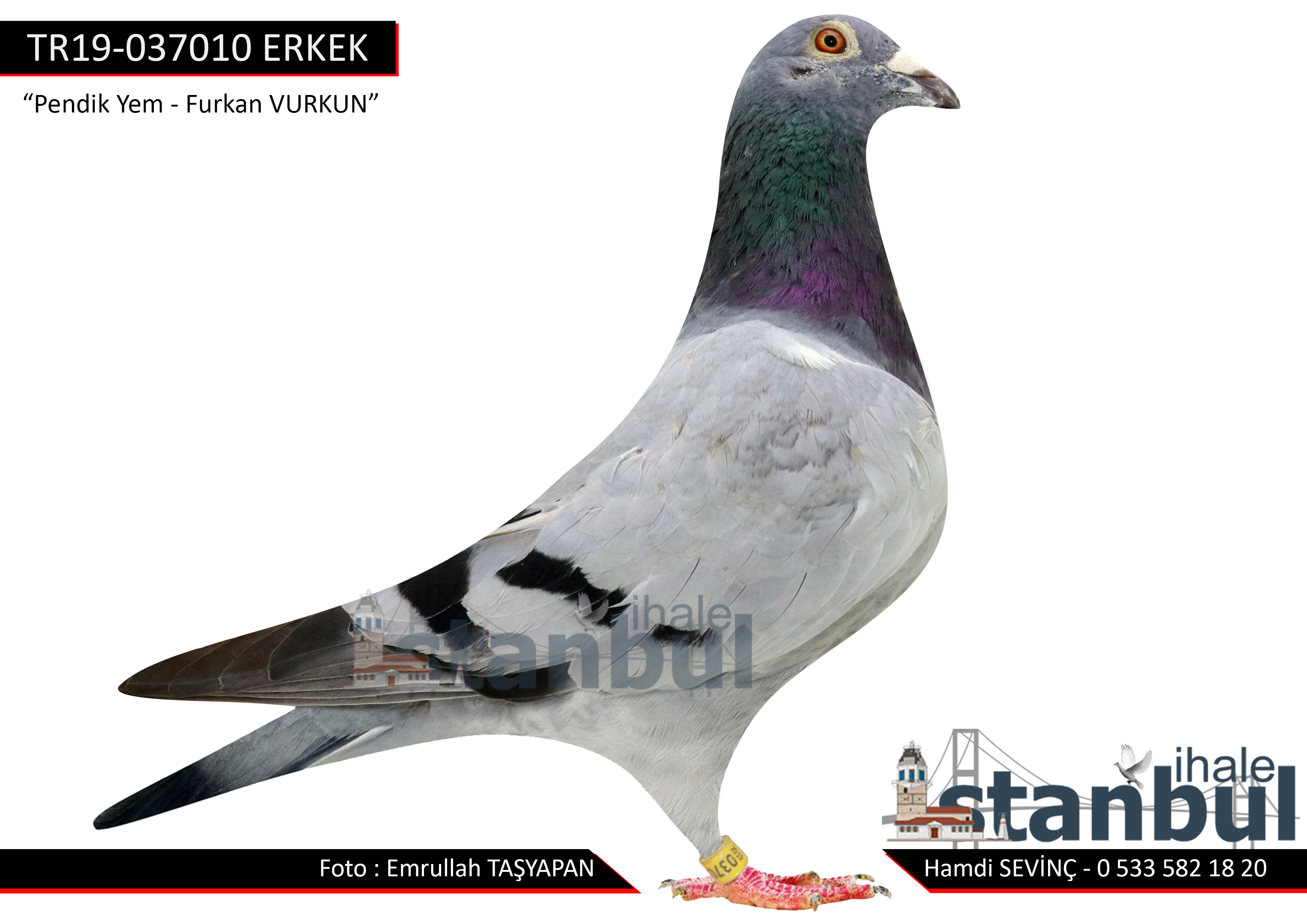 TR-19-037010 ERKEK %25 GABY %25 BARCELONA %25 GABY %25 P.VEENSTRA