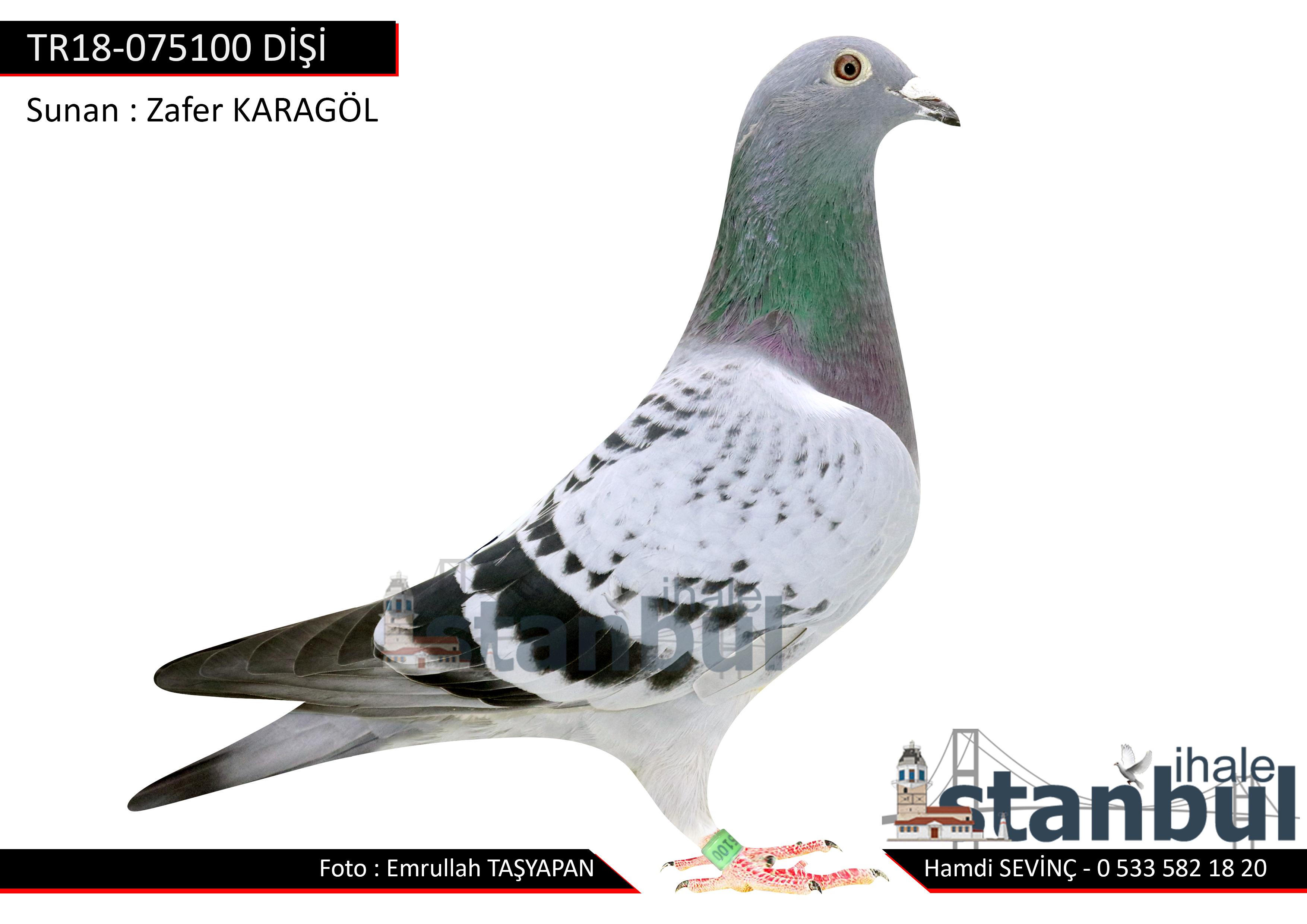 TR18-075100 DİŞİ