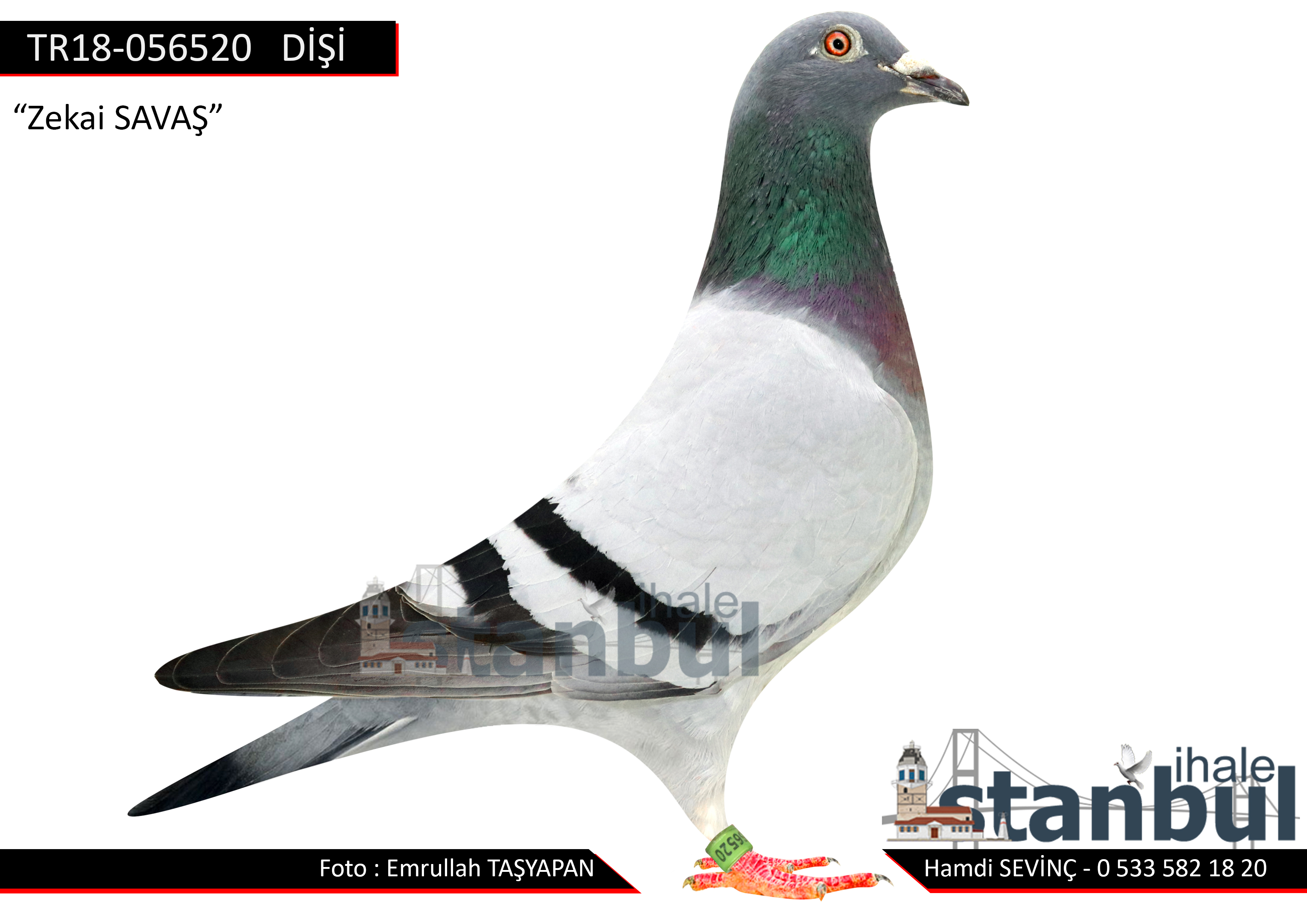 TR18-056520  %100 VAN LOON